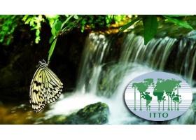 ทุนวิจัยในประเทศญี่ปุ่น โดยองค์กร ITTO มูลค่ากว่า 3 แสนบาท